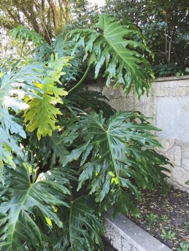 Sunken Gardens // Napier, NZ