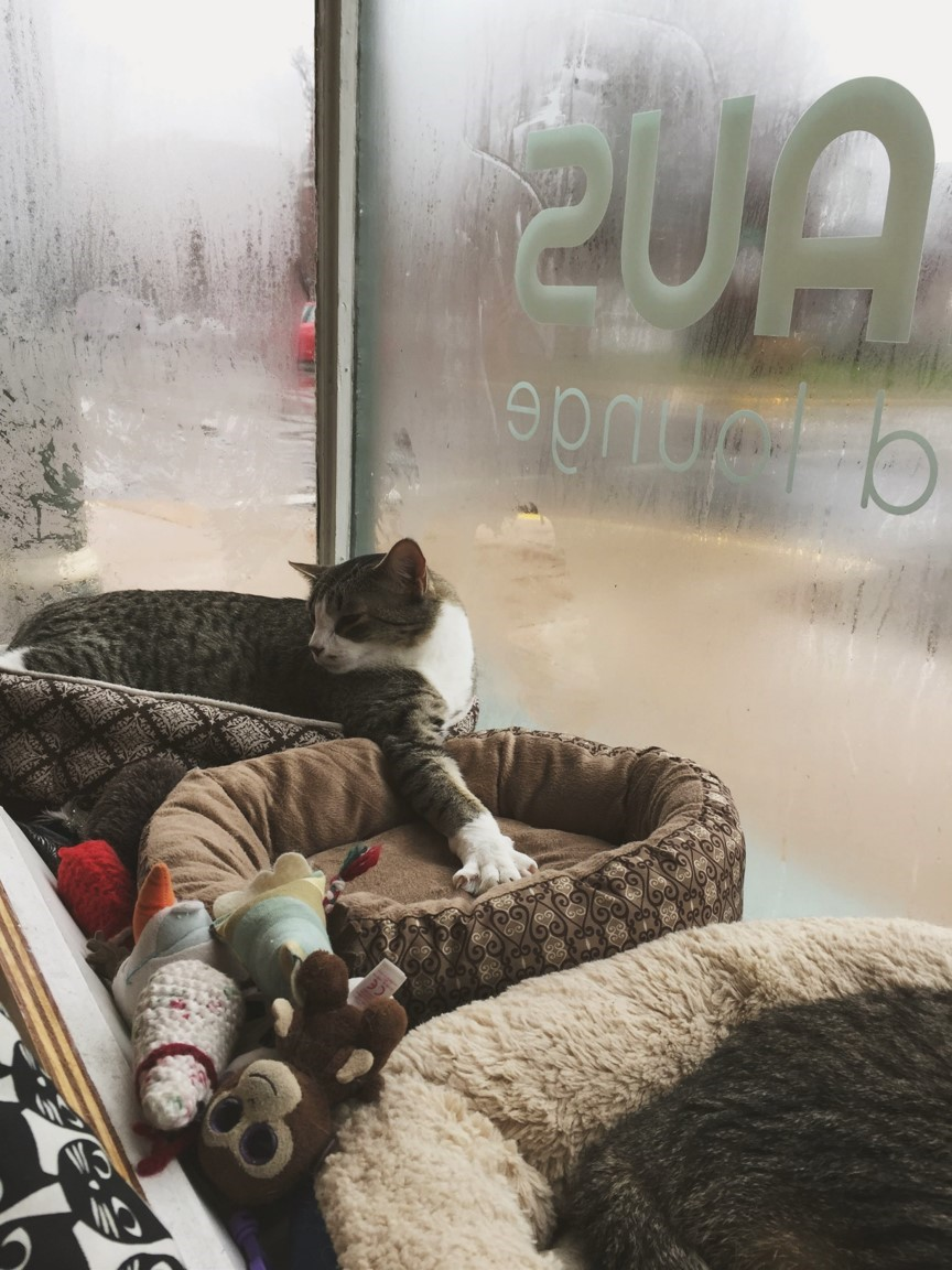 If cats and cafes are two of your favorite things, then St. Louis' Mauhaus Cat Cafe and Lounge should definitely be at the top of your to-do list!