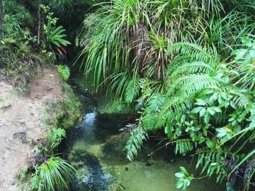 Hiking the Abel Tasman Coast Track