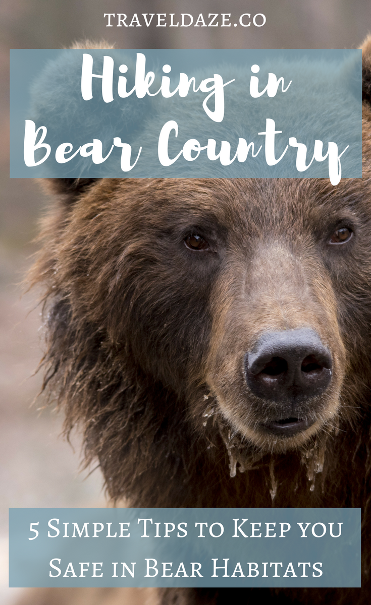 Hiking in bear country comes with added dangers. It is vital that you are aware of the dangers, and that you prepare yourself for possible bear encounters (although they aren't too common). Here's how to avoid bear encounters on the trail. #hiking #hikingtips #outdoors #outdoorsafety