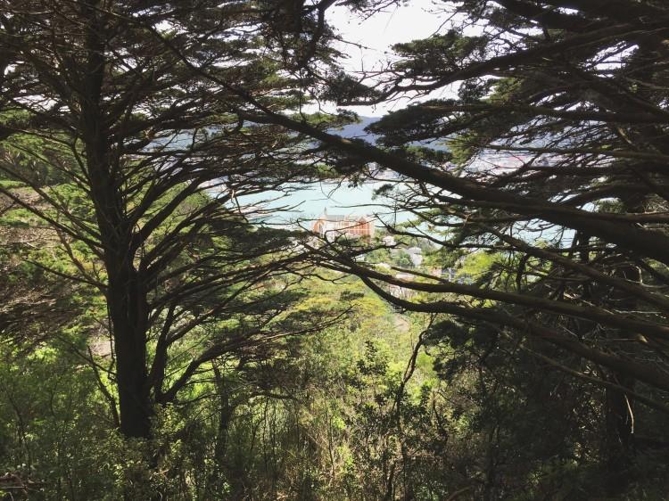 Mount Victoria Lookout: The Best View of Wellington