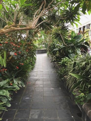 Wellington Botanic Garden // Wellington, NZ