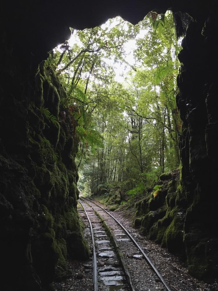 railway tracks in a forest