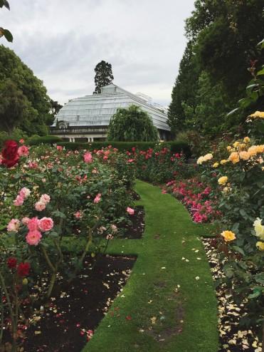 Christchurch Botanic Gardens: Rose Garden